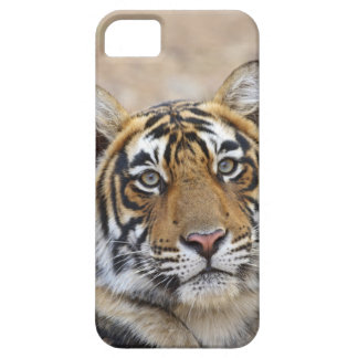 Portrait of Royal Bengal Tiger, Ranthambhor iPhone 5 Covers