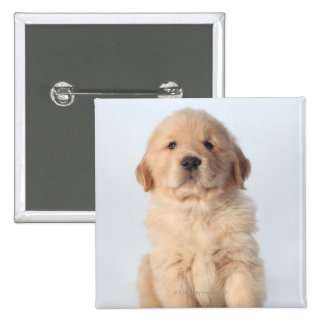 Portrait of six week old golden retriever puppy. 2 inch square button