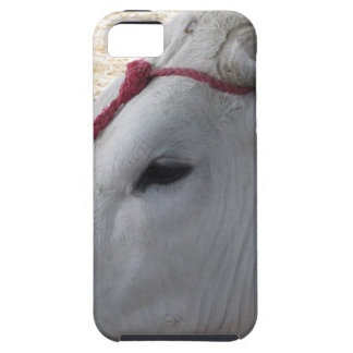 Portrait of the Chianina, italian breed of cattle Case For The iPhone 5