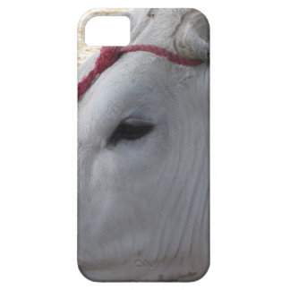 Portrait of the Chianina, italian breed of cattle iPhone 5 Covers
