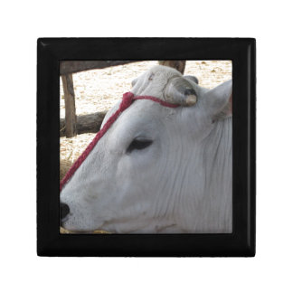 Portrait of the Chianina, italian breed of cattle Keepsake Box