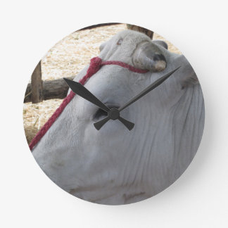 Portrait of the Chianina, italian breed of cattle Round Clock