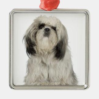 Portrait of Tibetan Terrier puppy Metal Ornament