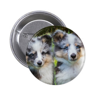 Portrait of two young sheltie dogs 2 inch round button
