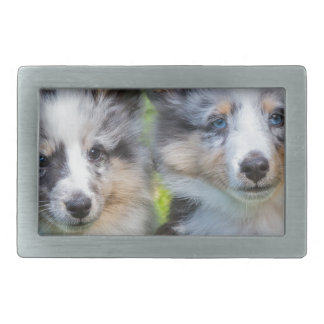 Portrait of two young sheltie dogs rectangular belt buckles