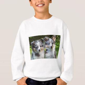 Portrait of two young sheltie dogs sweatshirt