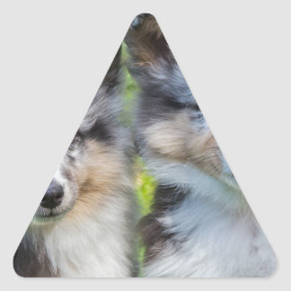 Portrait of two young sheltie dogs triangle sticker