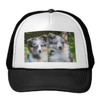 Portrait of two young sheltie dogs trucker hat