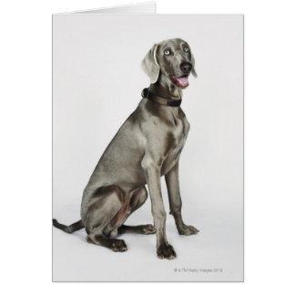 Portrait of Weimaraner dog Card