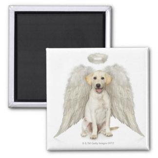 Portrait of white Labrador retriever wearing Square Magnet