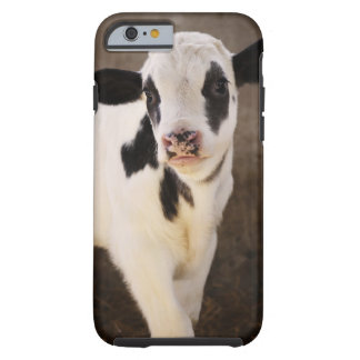 Portrait of young calf in stable tough iPhone 6 case