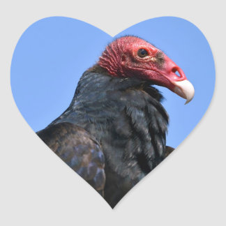Portrait Turkey vulture Heart Sticker