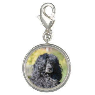 portugese water dog.png charm