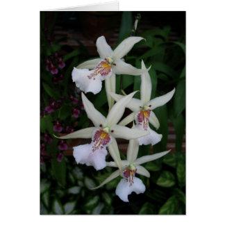 Portuguese-feliz aniversário-four orchid greeting card