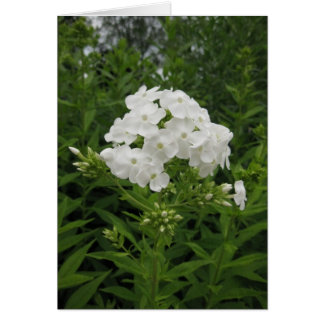 Portuguese-feliz aniversário-white flower greeting card