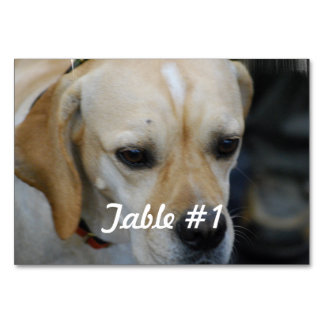 Portuguese Pointer Dog Table Card