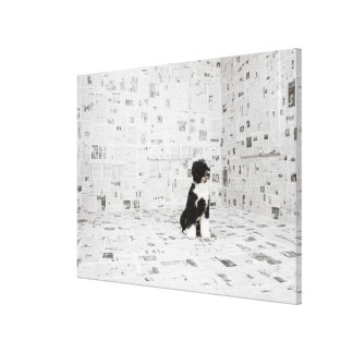 Portuguese Water Dog in room covered in Canvas Print