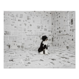 Portuguese Water Dog in room covered in Poster