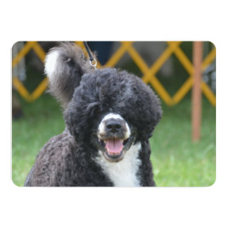 Portuguese Water Dog Announcement