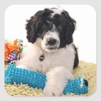 Portuguese Water Dog Puppy With Toys Square Sticker