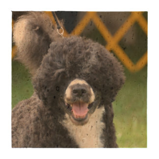 Portuguese Water Dog Drink Coaster