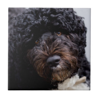 Portuguese water dog tiles