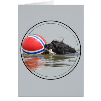 Portuguese Water Dog with Buoy Ball Card