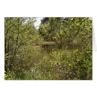 Portumna Forest, Galway, Ireland Greeting Card