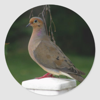 Posed Mourning Dove Classic Round Sticker