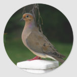 Posed Mourning Dove Sticker