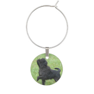Posing Affenpinscher Wine Glass Charm