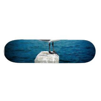 Posing for Fish Skate Board