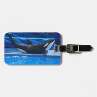 Posing Orca Luggage Tag
