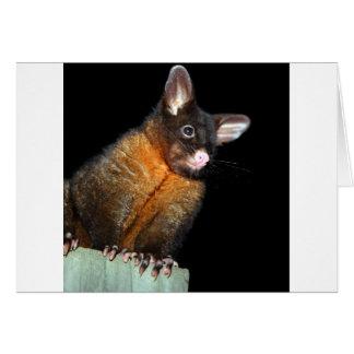 Possum at night card