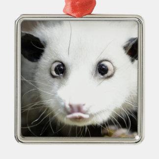 Possum Design Silver-Colored Square Ornament
