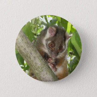 Possum In A Tree 2 Inch Round Button