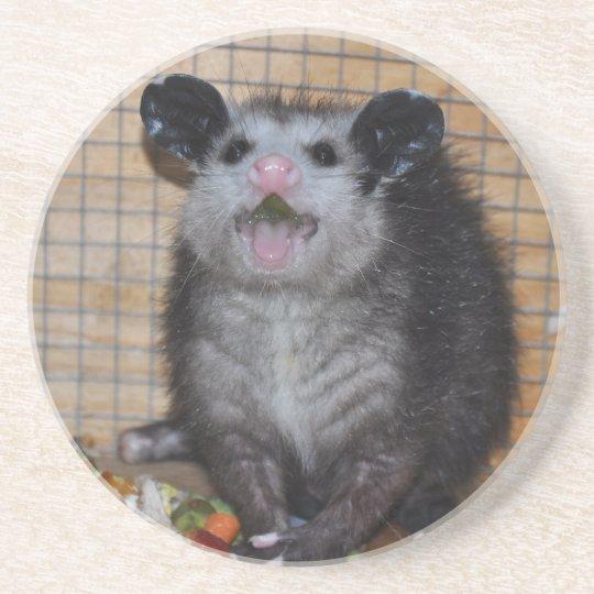 Possum on a coaster