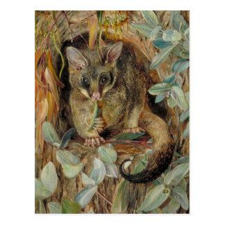Possum up a Gum Tree by Marianne North Postcard
