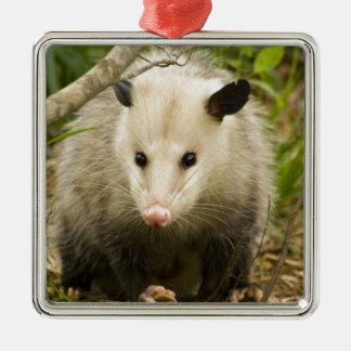 Possums are Pretty - Opossum Didelphimorphia Silver-Colored Square Ornament