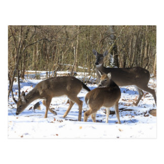 Post Card - Deer in Snow
