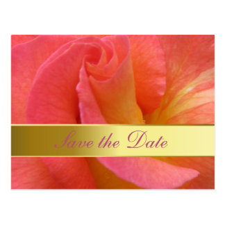"Post Card--""Mardi Gras"" Rose Postcard"