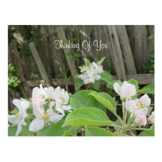 Post Card--Orange Blossoms Postcard