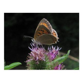 Postal butterfly postcard