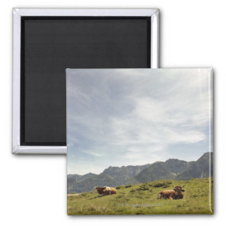 postalm road, weissenbachtal, 3 square magnet