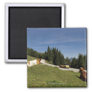 postalm road, weissenbachtal, square magnet