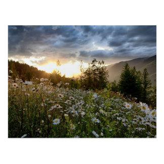 """POSTCARD ~ """"A Daisy Sunset"""""""