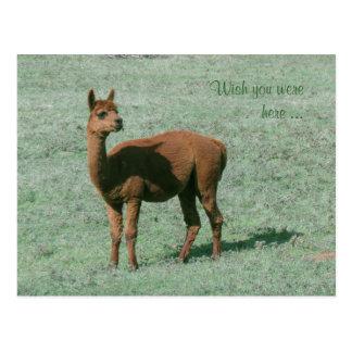 Postcard - Alpaca - Wish you were here
