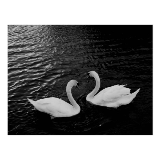 Postcard-Animals-Swan Pair Postcard