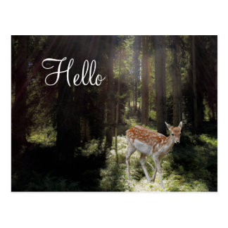 Postcard Baby Fawn in Morning Sunbeam Forest