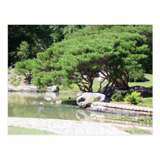postcard beautiful tree leaning over a pond